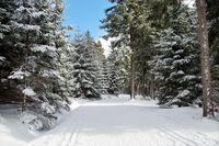 winter-4913971